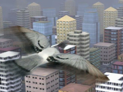Online Game Fly Like a bird 3